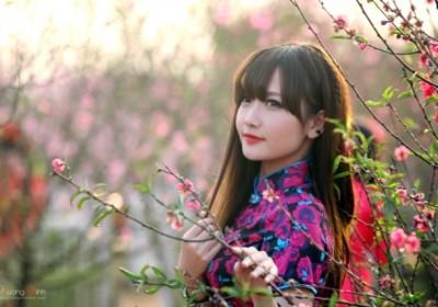 Những làng hoa gần Hà Nội dịp giáp Tết